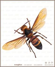 绝对强!Illustrator渐变网格描绘精致黄蜂
