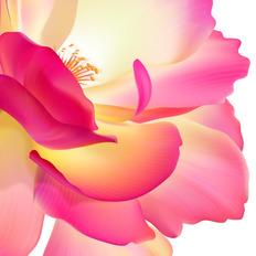 AI的网格工具绘制花瓣