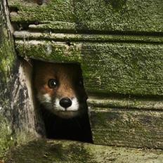 废弃房子里的动物们