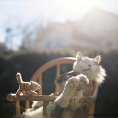 为离世小动物们营造幸福梦境